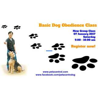 Dog Obedience Training Course, Puppy/Basic Level