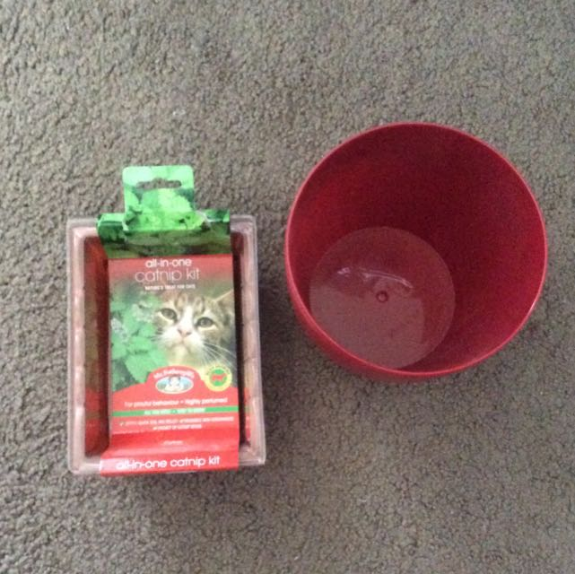 Catnip Seed Kit And Pot