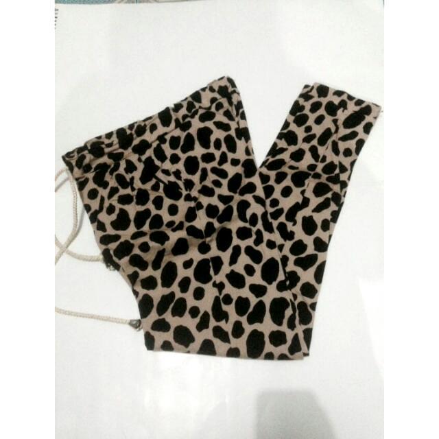 Leging Leopard