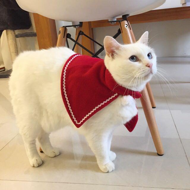 貓咪聖誕披風/貓斗篷