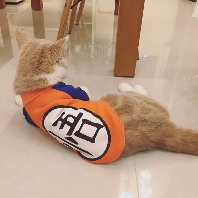 寵物衣服*悟空 貓衣服