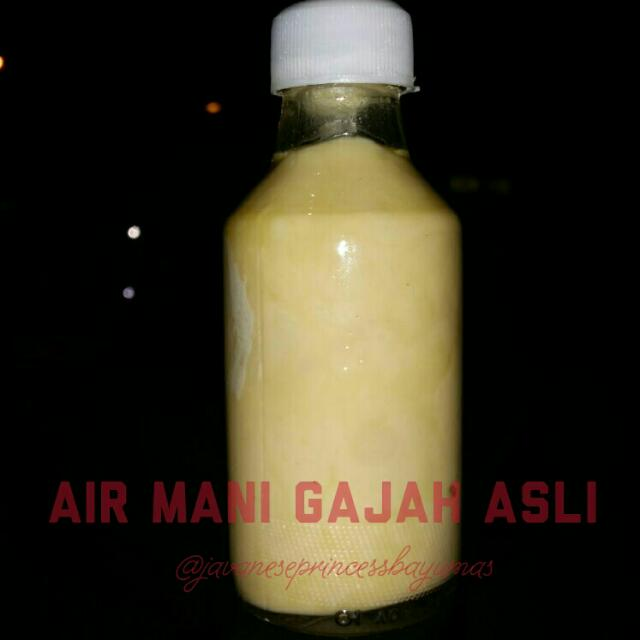 Selling Original Elephant Sperm Air Mani Gajah Asli Sumatra Trial