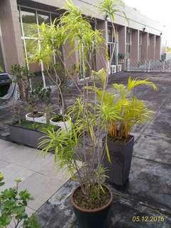 [Price Reduce] Garden Plants