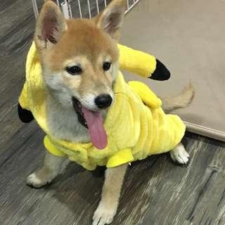 皮卡丘寵物衣服
