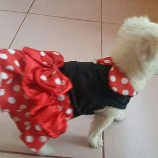 mickey mouse dress for dogs