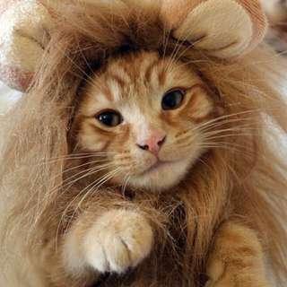 Cat Lion Mane (Cat wig)
