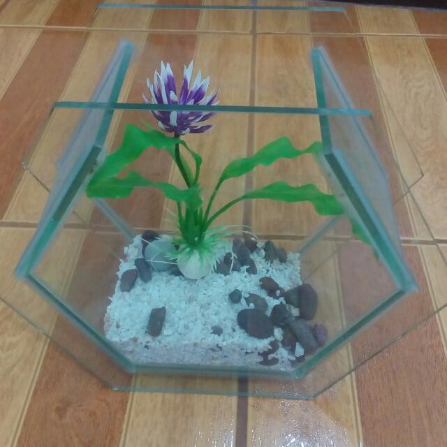 Small Aquairum