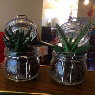 Easy Care Home-Made Succulent Terrariums