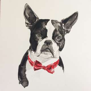 Boston Terrier Watercolour Painting