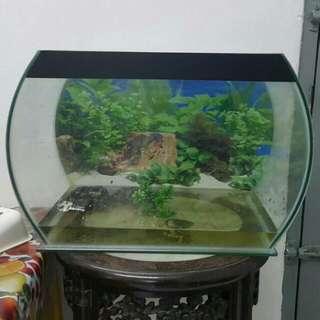 Aquarium Fish Tank Turtle