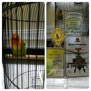 Lovebird Dan Sangkar Bersetifikat