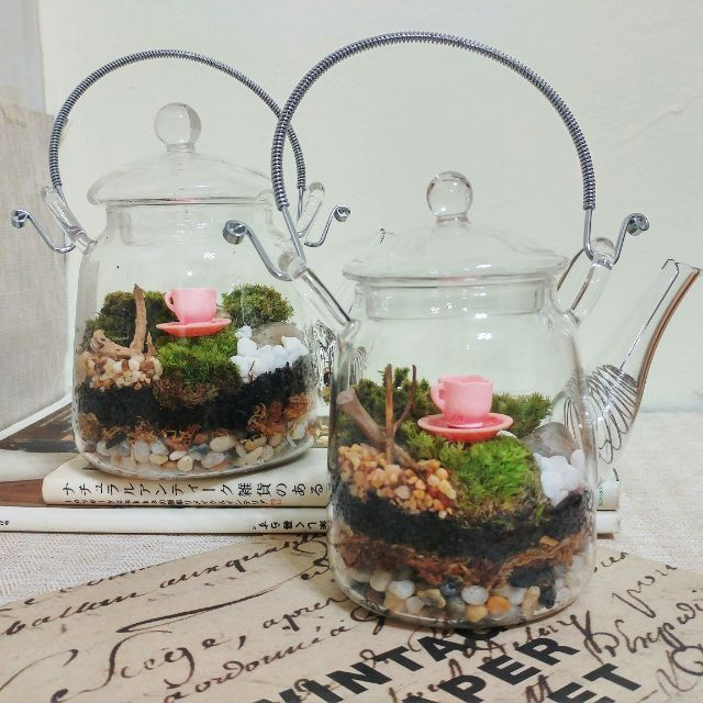 Msg 27 Afternoon Tea Big Closed Terrarium Gardening On Carousell
