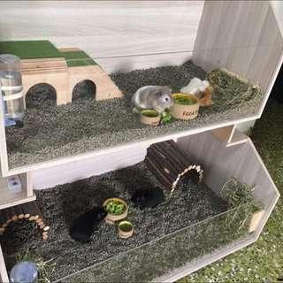 Hamsters / Guinea Pig House