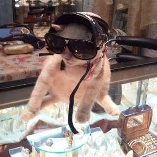 獨家設計貓狗頭盔3 會展有售 Dog Cat Helmet