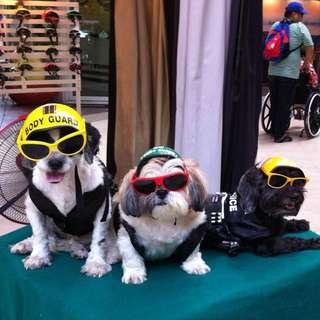 獨家設計狗頭盔 會展有售 Dog Helmet