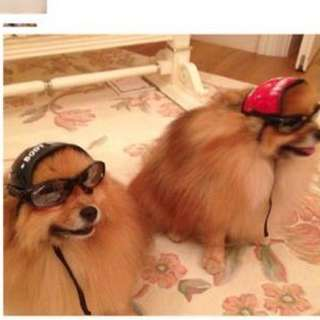獨家設計狗頭盔 會展1R48有售 Dog Helmet