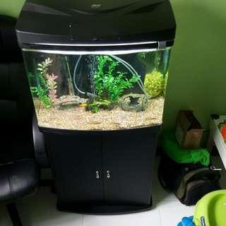 2ft Fish Tank With 2 Door Cabinet