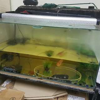 3 FEET FISH TANK TO GIVE AWAY FOR FREE