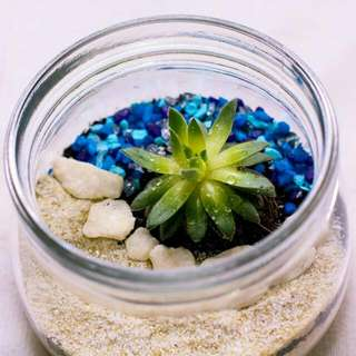 Antheia Terrarium S Items For Sale On Carousell