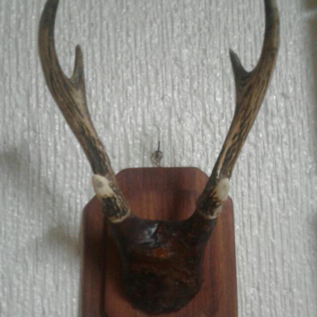 Vintage Deer Horn