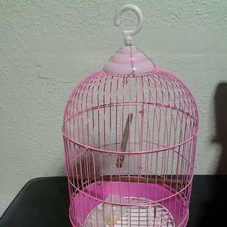 Selling Pink Colour Bird Cage