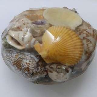 【New 全新】日本沖繩海螺擺設  #11flashsale