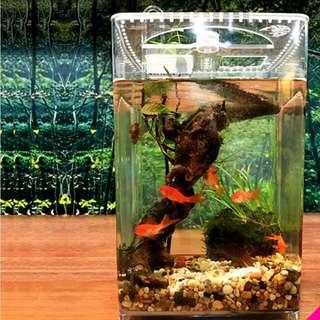Desktop Ecological Aquarium/ Terrarium