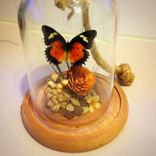 Butterfly In Done