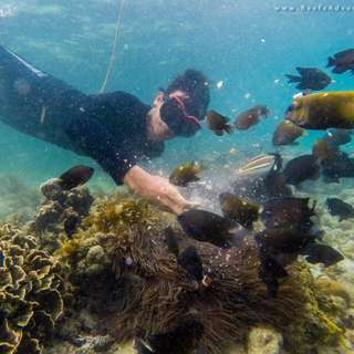 Snorkeling, Diving & Underwater Photography