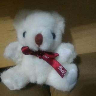 Teddy Bear泰迪熊