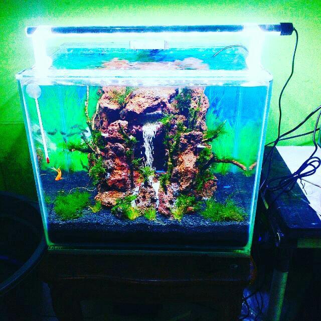 101 Gambar Aquascape Air Terjun HD