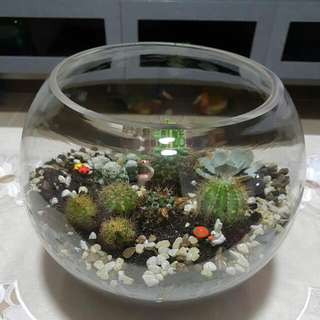 Cactus In A Bowl