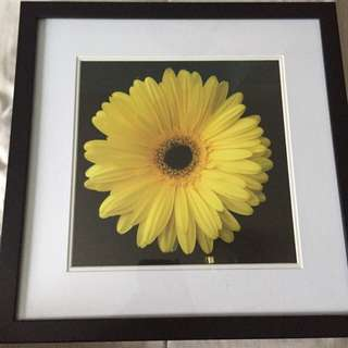 Framed Flower Pictures