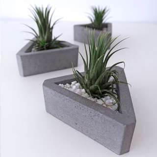 Concrete: Triangle With Air Plant