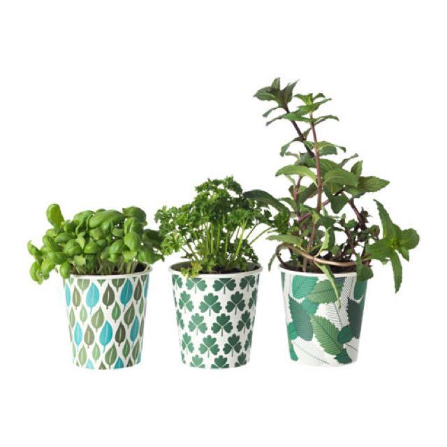 Ikea Growing Kit herbs