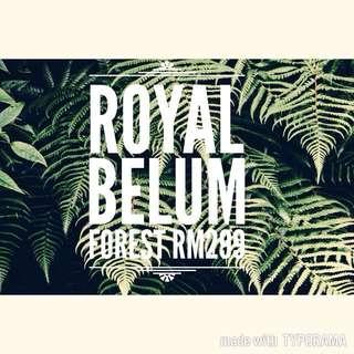 ROYAL BELUM FOREST