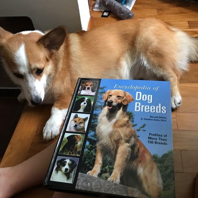 Encyclopedia Of Dog Breeds Book