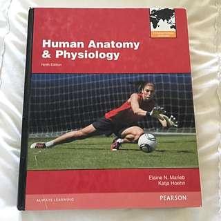 Human Anatomy & Physiology