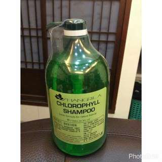 香格里拉 葉綠素洗髮精