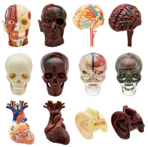 人体模型ストラップⅠ(1) 全12種 標本 解剖 京都科学 奇譚 腦袋購造 骨頭