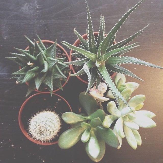 Succulents !!