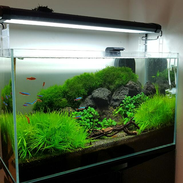 2 ft crystal clear aquarium 5mm thick with black wooden cabinet
