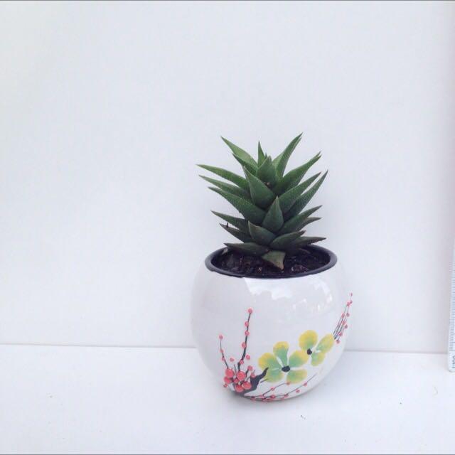 Succulent In Ceramic Floral Pot