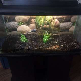 35 Gallon Aquarium With Everything You Need!