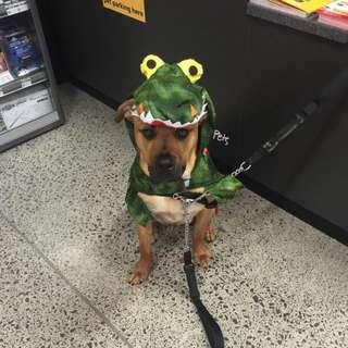 Dog Alligator Costume
