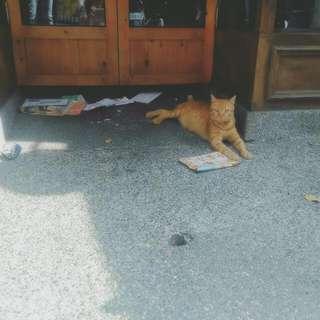 路邊遇到的貓