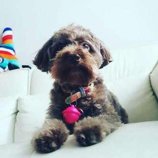 Weekend Dog Daycare