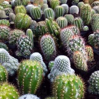 Assorted Cactus For Sale