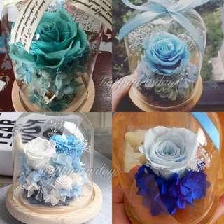 永生花 blue collection