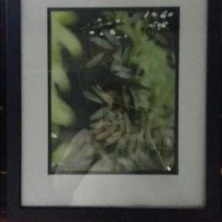 Framed Leaf Picture